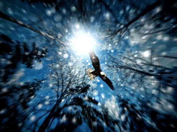 とある冬の雪と鳥なimage