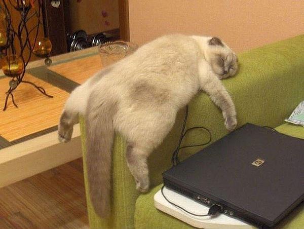 とあるネコさんの爆睡なimage