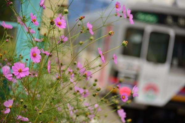 2013年10月11日 上田電鉄別所線 八木沢 1000系1003F