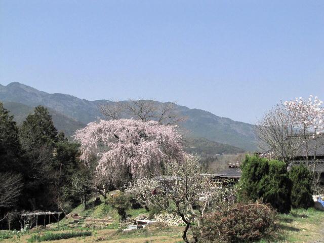 hayazaki01 (1)