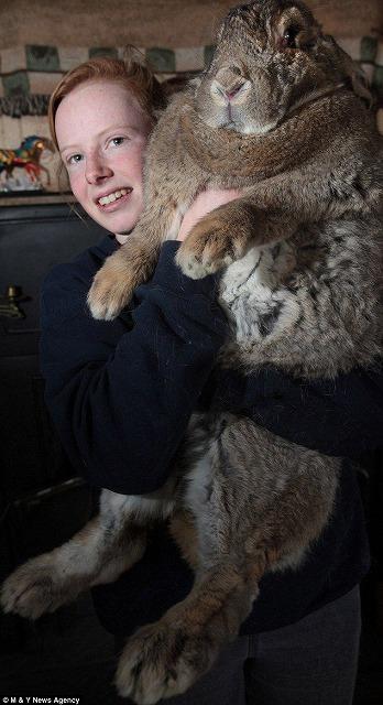 でかウサギ