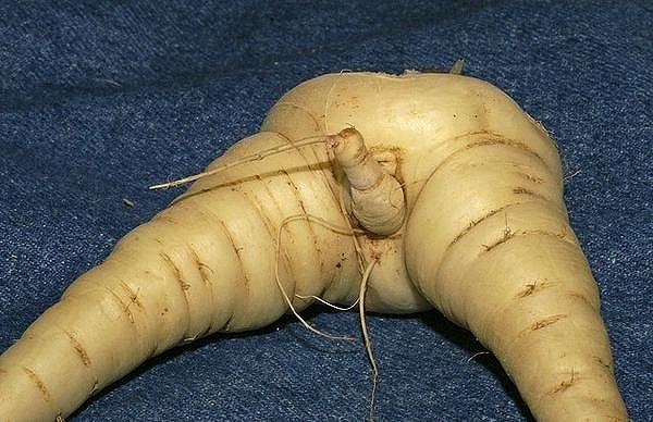 セクシー野菜4