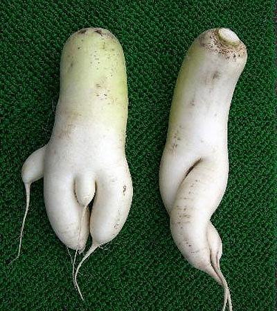 セクシー野菜14
