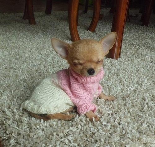 変顔犬11