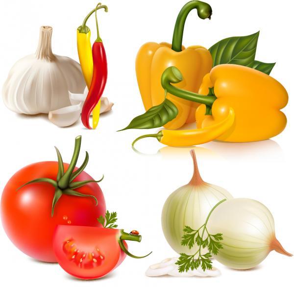 新鮮な野菜のイラスト fresh vegetables image