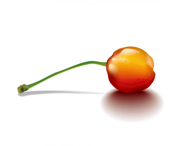 瑞々しいサクランボ nature realistic cherry vector