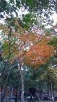 羅東林業園区の紅葉