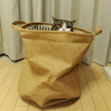 バッグに入った猫