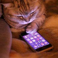 スマホを操作する猫