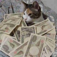 お金をたくさん持った猫