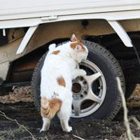 タイヤを外そうとする猫