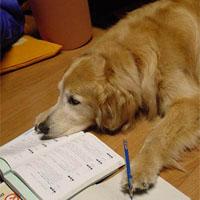 燃費を計算する犬