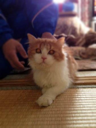 先住猫2014.2.9