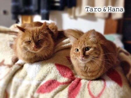 タロウ&ハナ2014.2.8