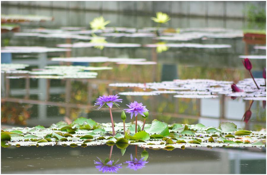 京都植物園・助手1