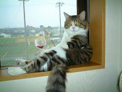 猫様 水瀬さん ワイン