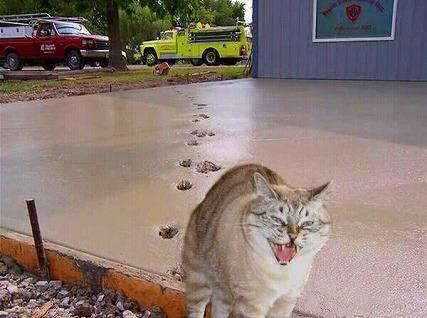 猫様 水瀬さん 逆ギレ 怒る 立入禁止