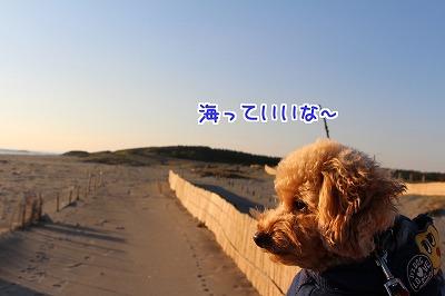 hama46.jpg