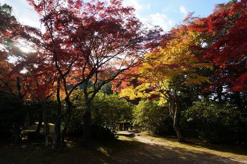 tenpai_koyo001.jpg