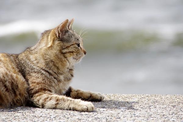 20130414茜浜の猫