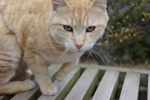 四番大日寺の猫