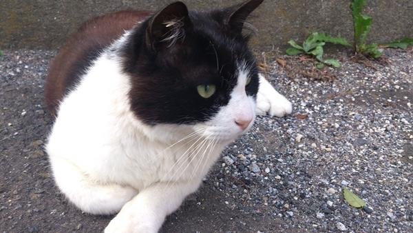 20130624津田沼の猫