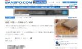 【情報】 なんと石川佳純選手、中国リーグ参戦せず!