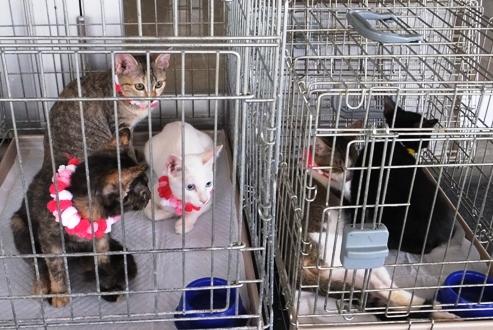 DSCF6210 - 保護5子猫