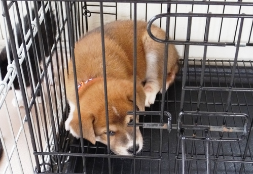 DSCF6223 - 持ち込み子犬