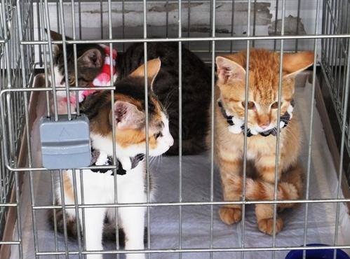 DSCF6232 - 保護3子猫