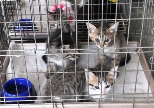 DSCF6273 - 持ち込み3子猫