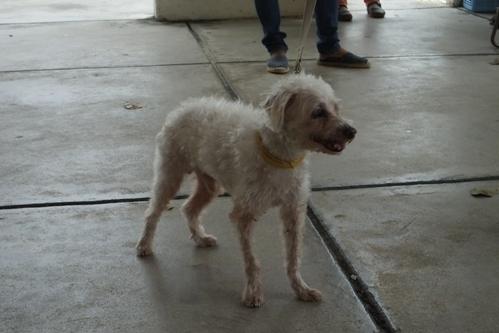 DSCF6371 - 参加犬