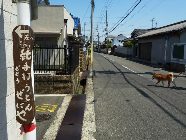 0525-zeniya-007-S.jpg