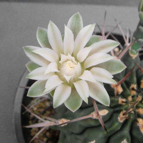 Sany0098--michoga--koehres seed