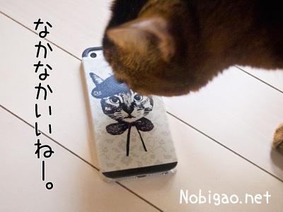 Nobigao アビシニアン