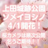 上田城跡公園ライブカメラ1(動画、640×480)