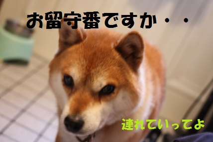 004_20140212113603526.jpg