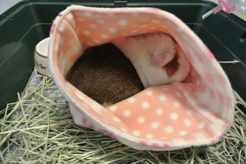 寝袋しおんさん3