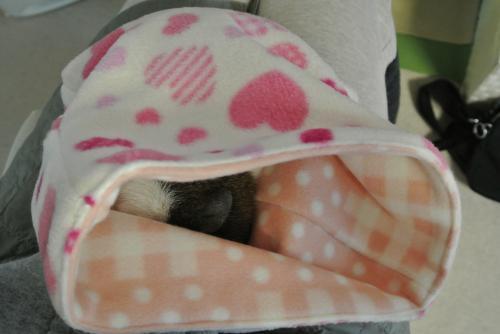 寝袋しおんさん2