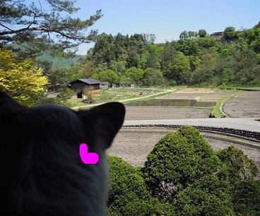 和田さんちからの眺め29