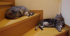 2バカの昼寝