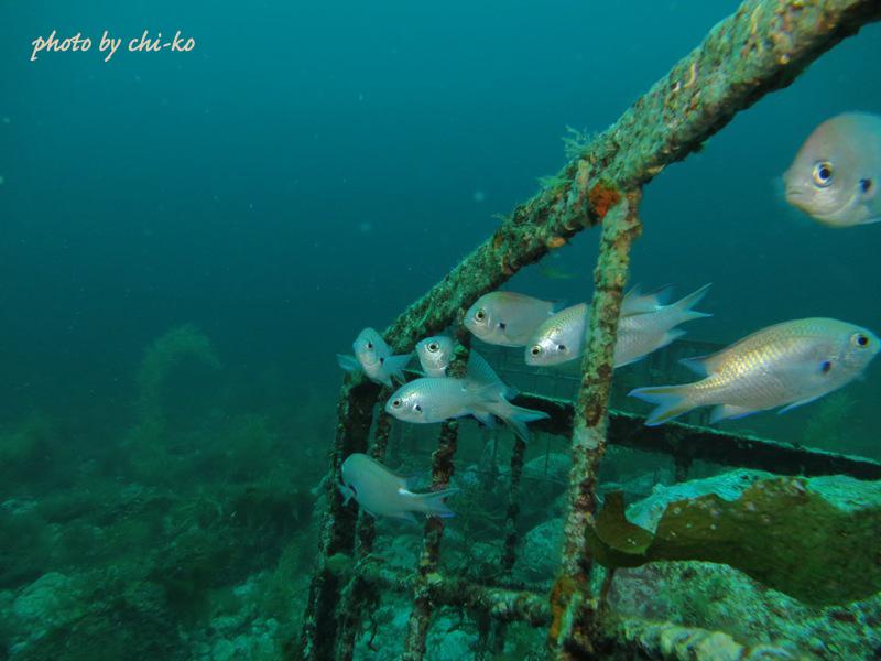 f9-6月29日2本目漁礁