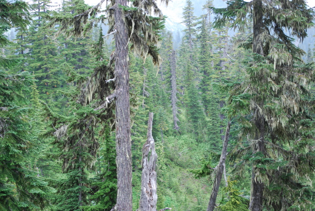 ダイヤモンドヘッドの森