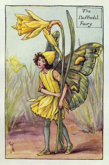 daffodil_flower_fairy