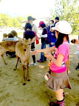 奈良公園シカ2