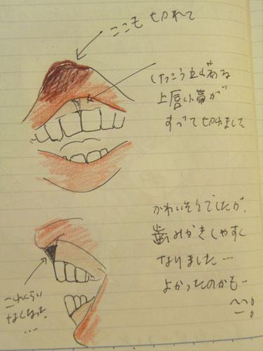 た 帯 切れ 上唇 小