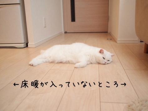 IMG_5399urabanashi.jpg