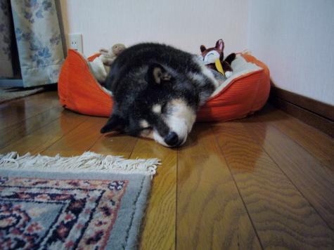 P1000472urabanashi.jpg