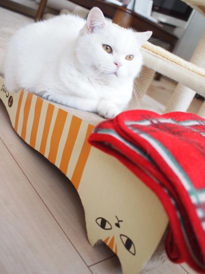 PB163677urabanashi.jpg