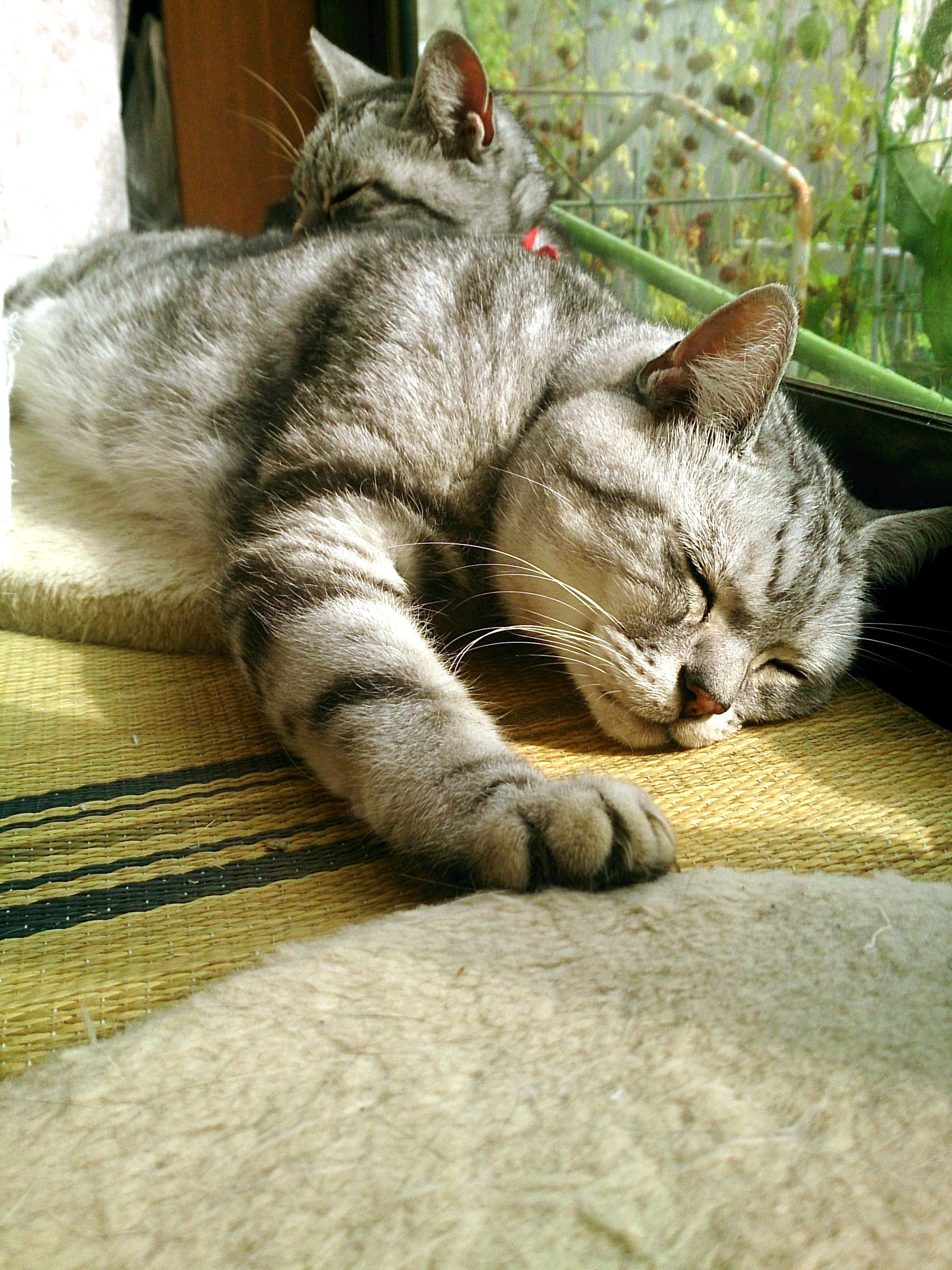 Cat_20141012-01.jpg